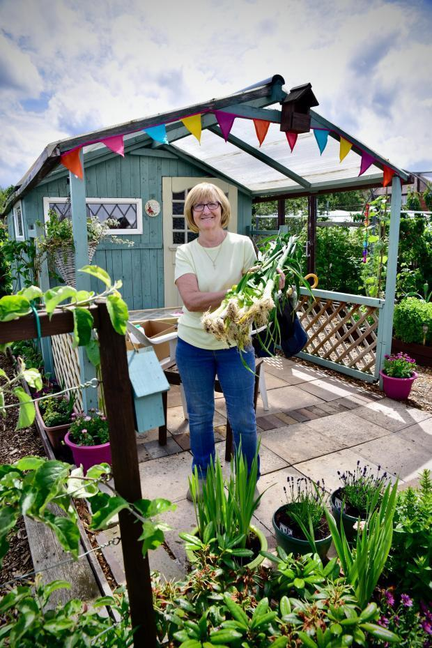 Grower Mary Simpson harvesting some leeks at Winsford's Over Allotments