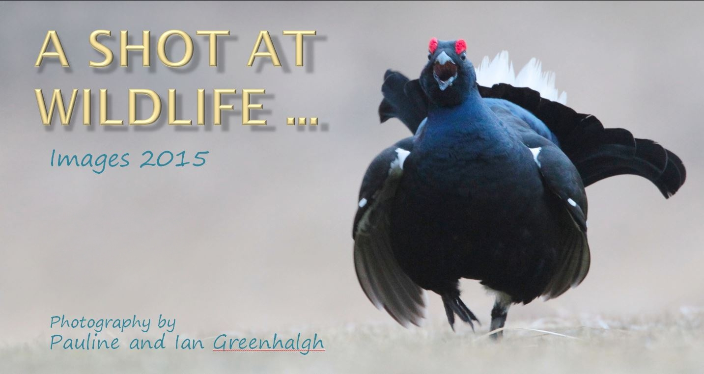 "Wirral Bird Club - "" A Shot at Wildlife 2015"" - Pauline and Ian Greenhalgh"