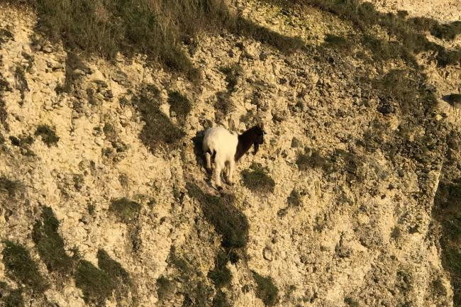 Goat stuck on a cliff in Henfield, West Sussex