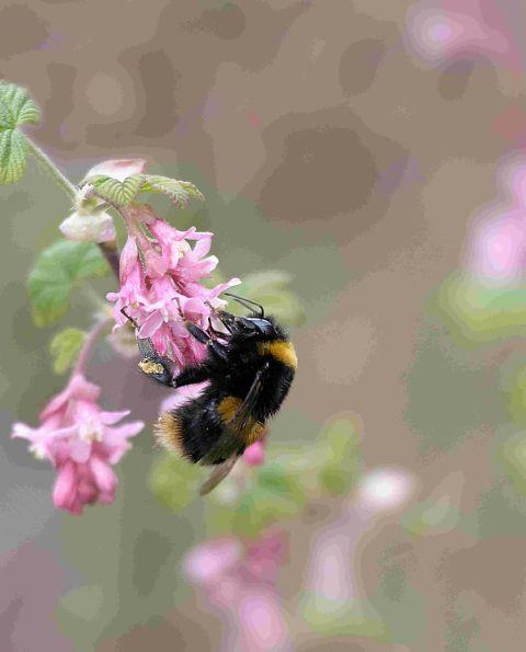 Winsford Guardian: Help to boost bee population at Wimborne