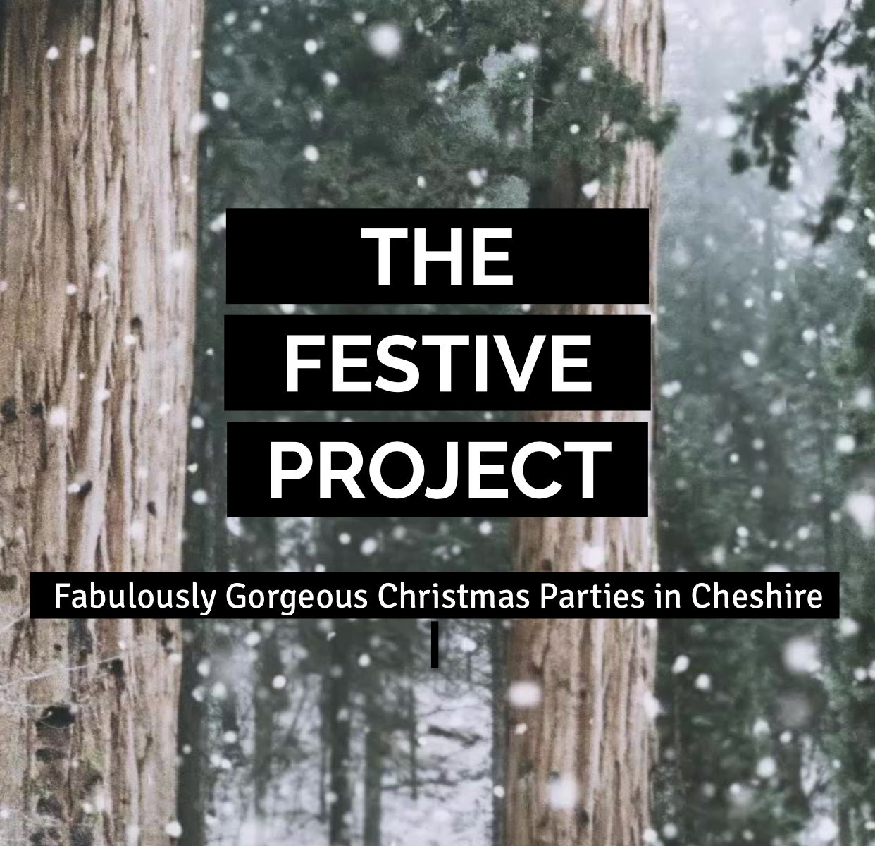 The Festive Project - Friday 22nd December