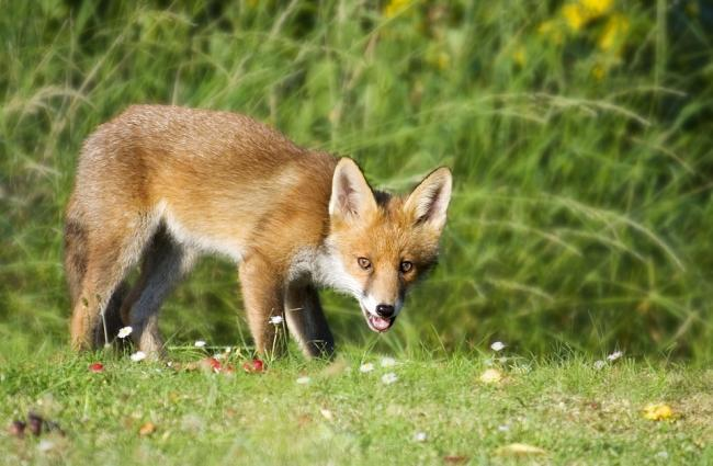 LETTER: Ban not ended wildlife killing
