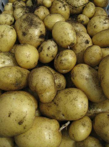 Winsford Guardian: Fixed prices: Charging customers too much for potatoes could land you in court SUBMITTED spuds-may-02