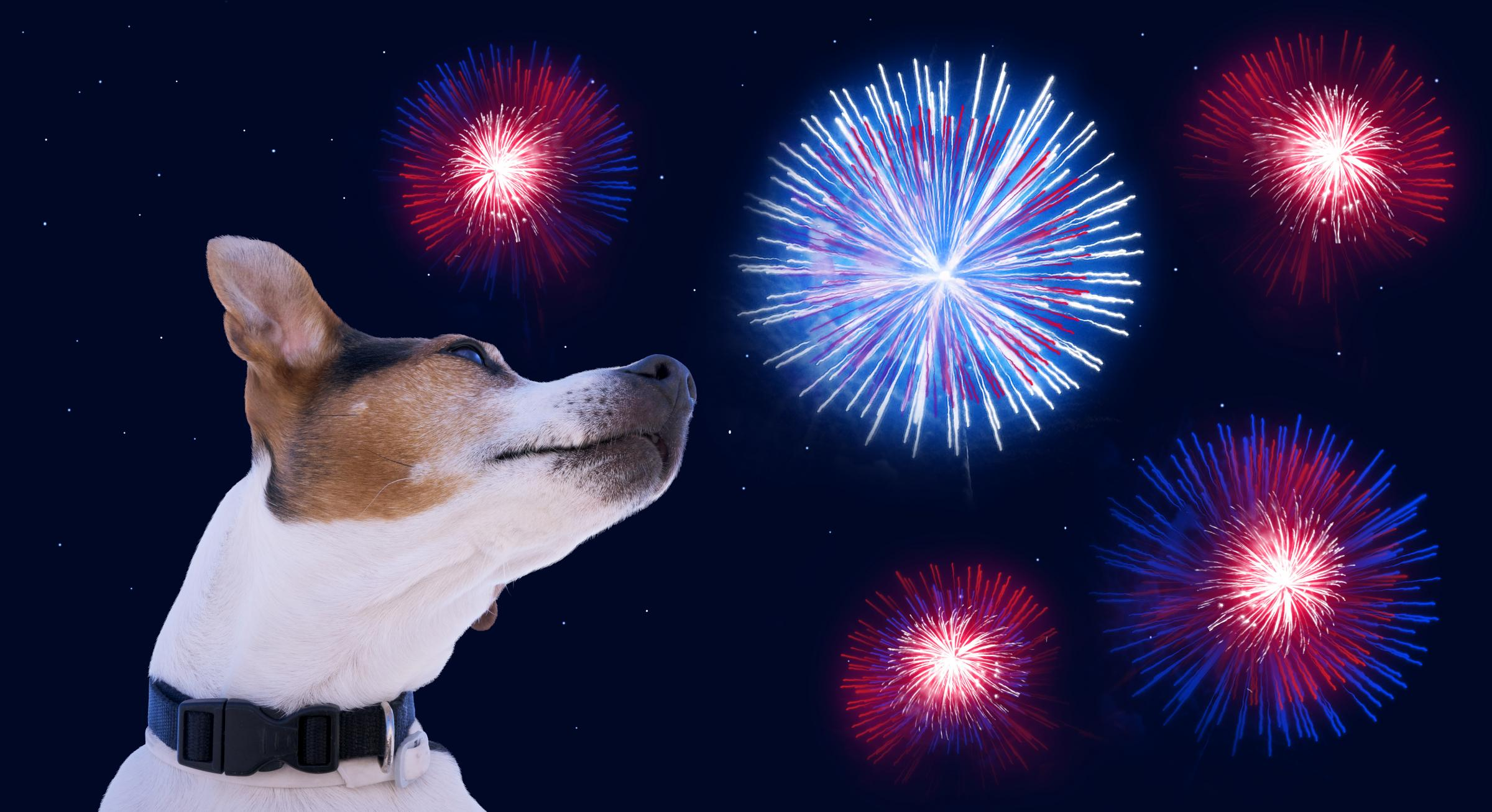 Dogs don't like fireworks